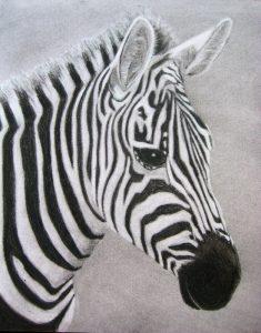 Final charcoal zebra