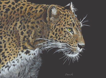Leopard - finished painting
