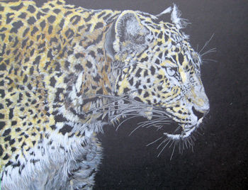 Leopard - adding yellows