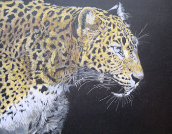 Leopard - refining colour