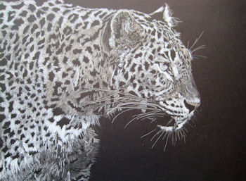 Leopard - white & grey